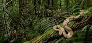antifurto casa fai da te: una giungla!